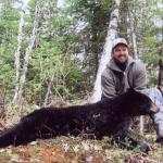 chasse ours noir laurentides quebec