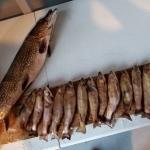 Pêche a la truite et au brochet au Rudy