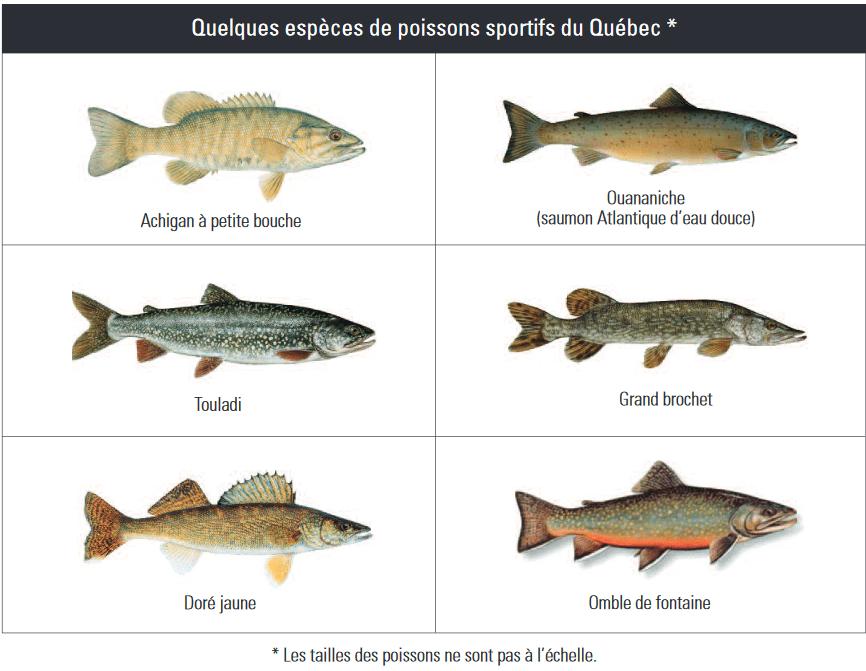 pêche au doré et autres poissons