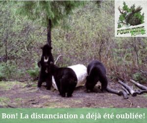 ours sur site d'appatage de la pourvoirie Rudy