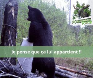 ours sur site d'appatage pourvoirie Rudy