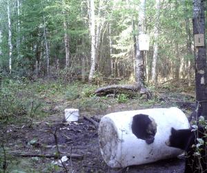 appatage des sites de chasse à l'ours