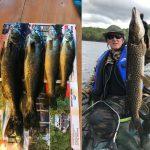 Pêche au doré et brochet au Rudy