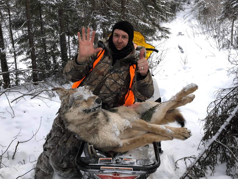 Trappage - Trappeur de Loup au Rudy